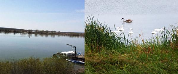 Dunărea la Corabia/ Lebede pe Olt (Foto: Ștefania Marineanu)